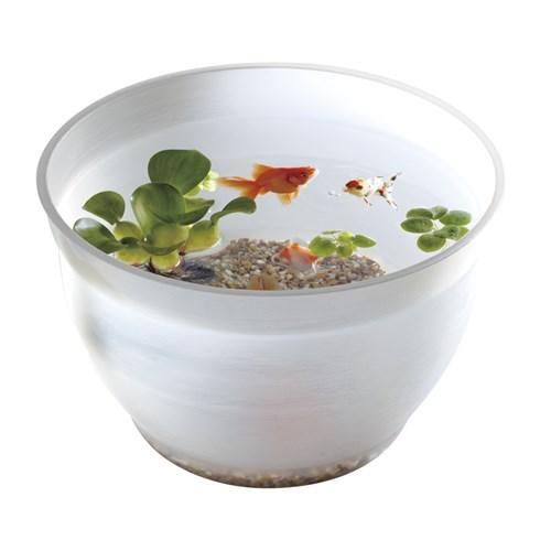 金魚の小鉢 しらゆき